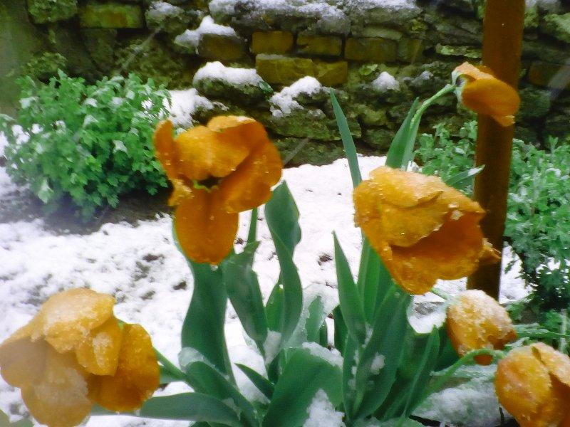 Сніг накрив вулиці Вознесенська 21 квітня