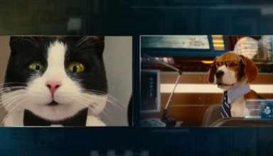хто розумніші - собаки або кішки